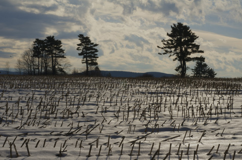 Lenox Winter